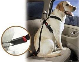 ремень безопасности для животніх