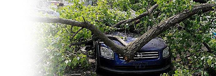 Каско упало дерево
