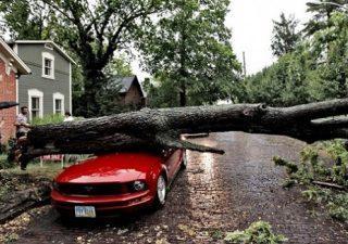На машину упало дерево, обращение за компенсацией